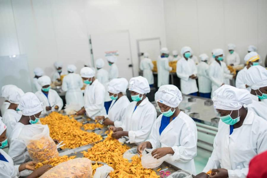 Processing of dry mangoes in Ghana for export